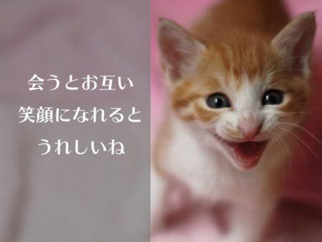猫の笑顔タイトル